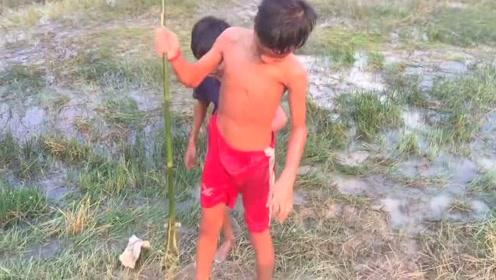 柬埔寨的农村小孩在田里用这种方式捕鱼,效率很高,做的烤鱼饭香