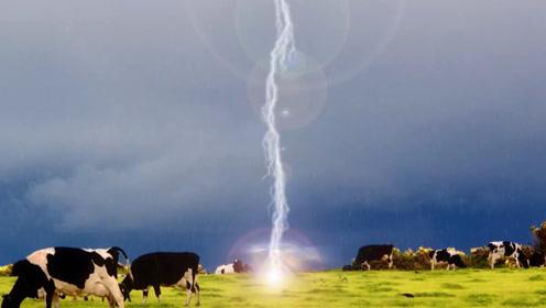 农场被一道闪电击中,80头牛跟着倒了霉,镜头记录全过程