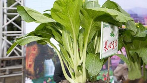 """世界上最""""贵""""的蔬菜,拍出66.66万元天价,当地人尊称为""""菜心至尊"""""""