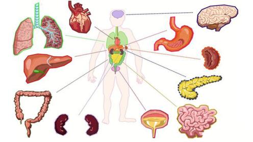 人身上有哪些器官拿掉后,不影响生存呢?