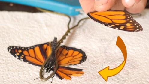 小哥给受伤的蝴蝶做手术,给它换上新的翅膀,太神奇了