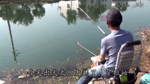 晴天小鱼活跃,用拉饵作钓,拉不停