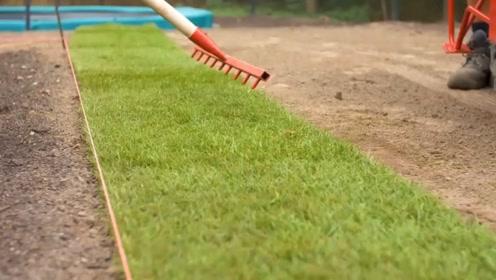 国外的草坪原来不是种出来的,而是用这样的方法得到的