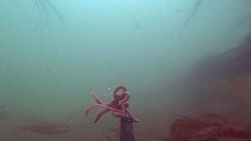 用蚯蚓钓鱼,小杂鱼多的情况下不能这样挂钩