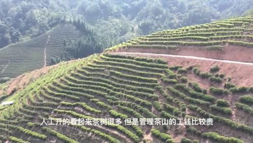 福建山区村民为致富 修山路把满山油茶树变为茶叶