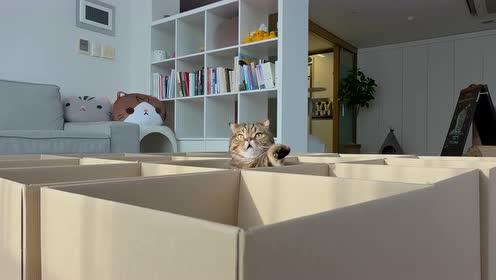 小猫咪放在纸箱子,太萌了