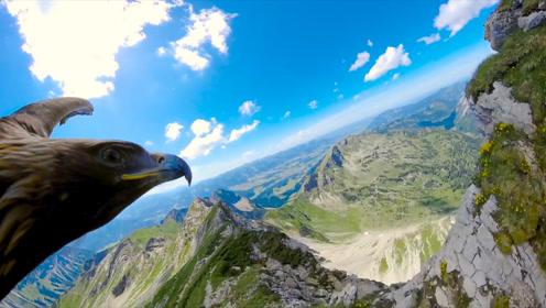 雄鹰视角是什么样的,国外男子在雄鹰身上安装摄像机,拍下壮观一幕!