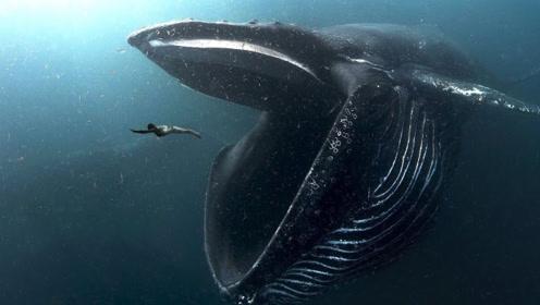 科普一下,假如我们被鲸鱼吞下肚子,还有机会生存吗?
