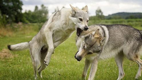 """都说""""咬人的狗不会叫,乱叫的狗不咬人""""?不要再被蒙在鼓里了!"""