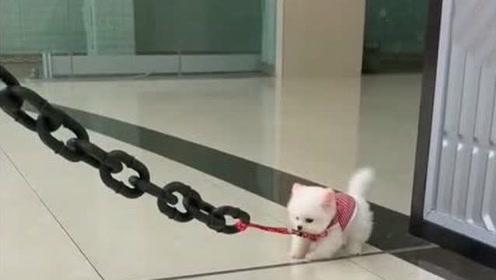 闺蜜要给我看她家凶狠的宠物,牵出来的一瞬间,你是来搞笑的吗?