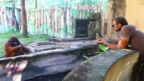 大猩猩找游客要香蕉,游客摇头表示不给,下一秒就后悔了