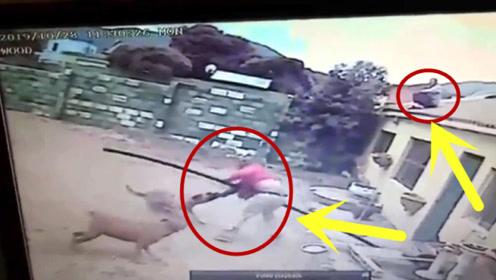 偷窃不成被狗咬,同伙在屋顶看戏,监控拍下这有趣全程