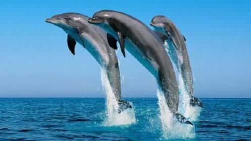 鲨鱼这么凶猛,为什么唯独面对海豚的时候,却很无力?