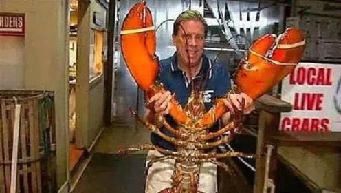 """世界上最长寿的龙虾,活了一个世纪还没死,政府赐它""""免死金牌"""""""