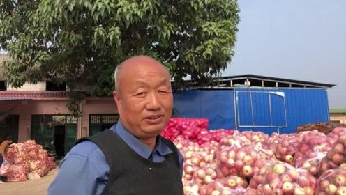 乾县农村大哥收苹果:一天最多收40吨,今年价格不好听听他咋说