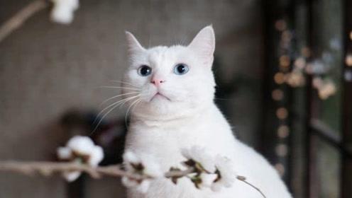 猫咪多次扑向小主人,网友以为宝宝被咬,结局被感动了