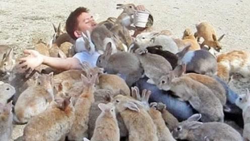 """澳洲兔子有多狂?差点把澳洲""""团灭"""",网友:来中国试试"""