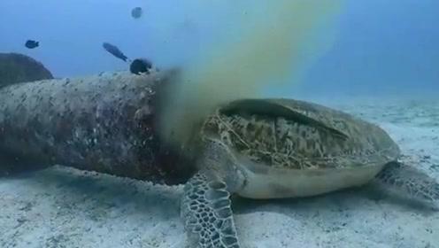 心痛!潜水者拍到菲律宾绿海龟 以人类下水道的污水为食