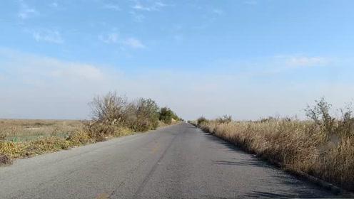 实拍东营黄河三角洲的公路,路上车很少,路旁芦苇摇曳很漂亮