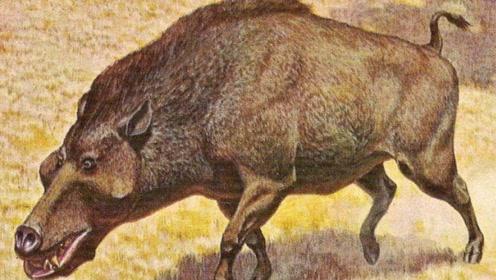 为什么猪没有在进化中灭绝?猪:麻烦你,看看我的祖先是谁