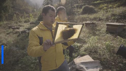 """26岁身家千万""""秦岭蜂农""""遇困难:蜂蜜收价50多元,市面仅卖20元"""