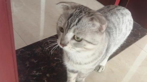 """小猫犯错被""""禁足"""",在家关了17天,猫:我快疯了,我要自由!"""