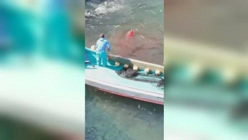 日本渔民偷猎海豚画面曝光:海湾一片血红