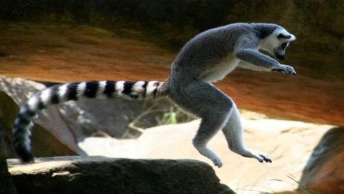 为什么动物有尾巴,人类却没有?这就有点意思了