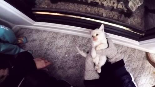 男子在雪地发现一只小猫,下一秒的画面让人感动,镜头记录全过程