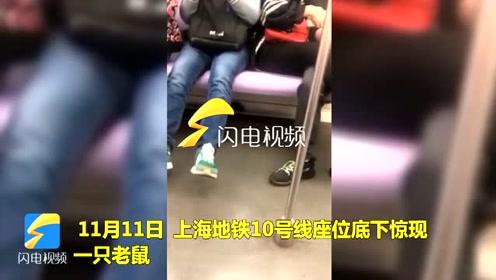 真•淡定哥!老鼠地铁上窜行 男子一脚踩住后淡定玩手机