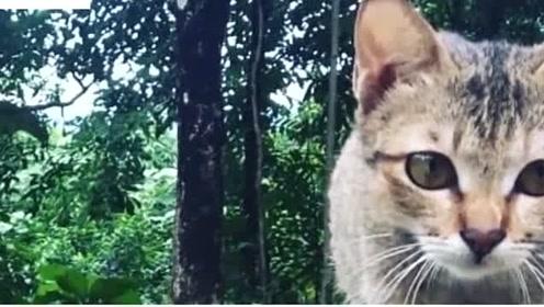 猫咪不小心将充电线弄断,被主人训斥一番后,竟抓回来了一条蛇