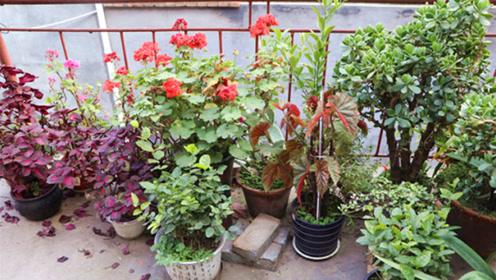 冬天养花,这几种花不要急着搬回家,室外冻几天,来年开花旺