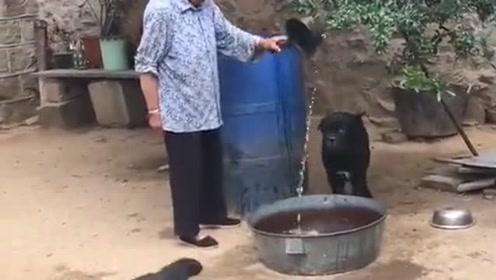 奶奶养了好多年的狗狗好凶哦,在村里没人敢欺负奶奶,万物皆有灵!