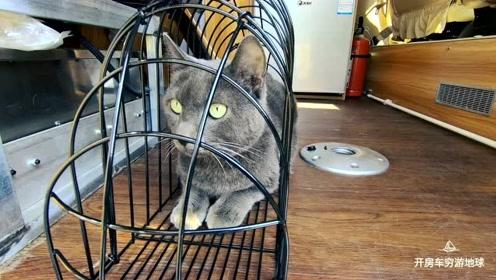 大病初愈!第一次开房车去遛猫,西班牙大肥猫专遛主人!