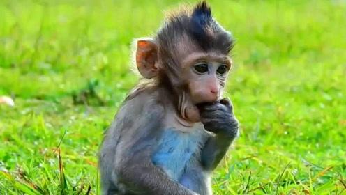 """猴子界的""""金城武"""",因为颜值太高,多家媒体争相求报道!"""
