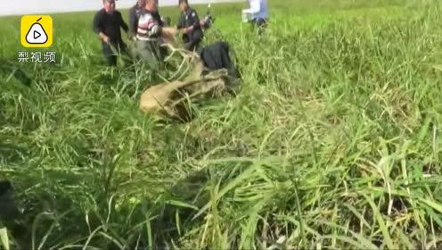 麋鹿头缠30斤重捕虾网,巡护人员徒步12公里解救