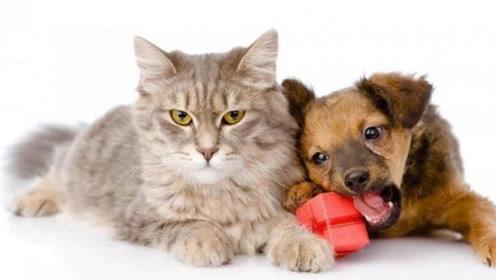 猫能识别自己的主人吗?它们又靠什么方式呢?神经科学家给出答案