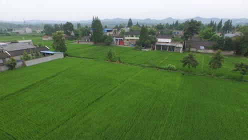 地里种不出东西,中国土壤没日本肥沃?原因得从100多年前说起