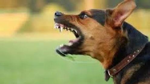 狗狗朝着一个方向狂叫,但人却看不见有东西,今天终于明白了