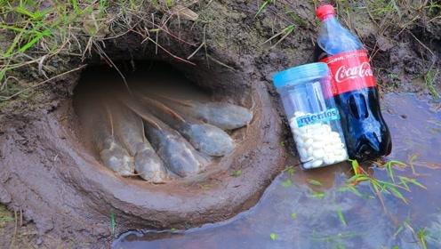 农村大哥发明神奇捕鱼法,用可乐和曼妥思捕鱼,竟瞬间收获满满!