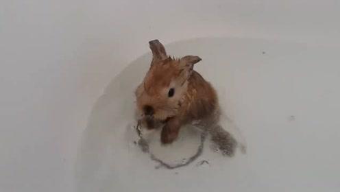 超级萌的小兔兔第一次洗澡实录,这两个小宝贝真是可爱炸了!