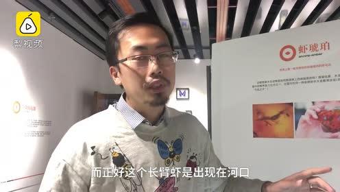 """世界首个!中国科学家发现""""琥珀虾"""",化石标本距今2200万年"""