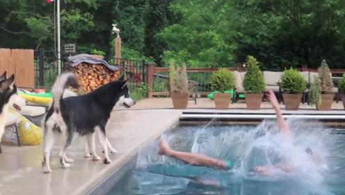 主人假装溺水,两只二哈跳进水里救人,镜头拍下暖心的一幕