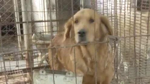 爱狗人士集资救上百条狗,一年花13万