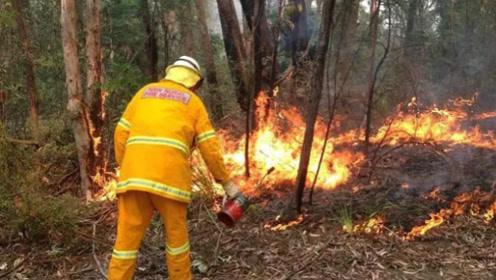为何澳洲总是猝不及防有大火?反复折腾消防员的竟是这货,网友:怎么可能!
