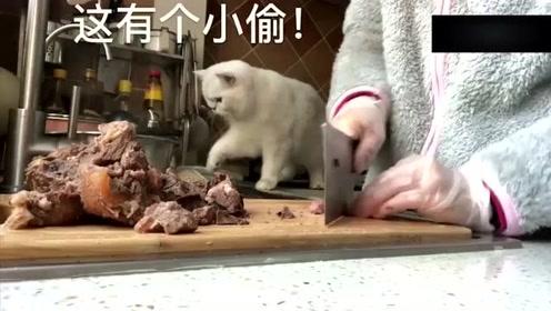 为什么小猫咪的脸上和嘴上红红的?网友:这是偷吃口红了吗?太可爱了!