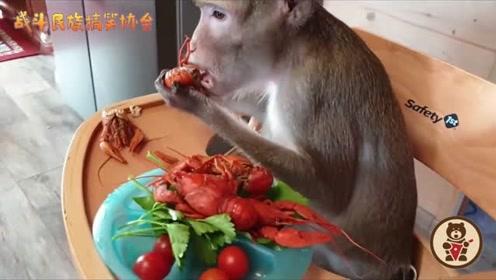 家养的猴子嘴就是挑!非得有小龙虾才肯吃饭