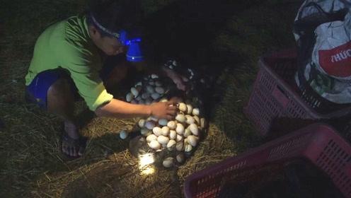 精养的上万只土鸭,一到深夜,村民就忙着捡鸭蛋,一会收获好几框