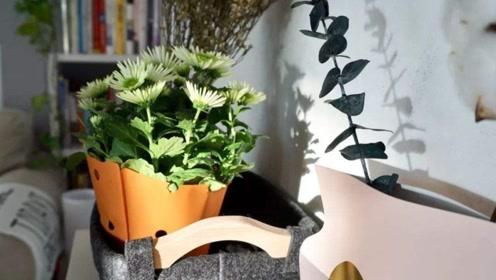 你家的盆栽放位置了吗?七大风水方位一点就通!