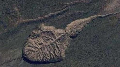 """地球上最大的""""蝌蚪"""",科学家发现后非常的担忧:这是危险的开始"""